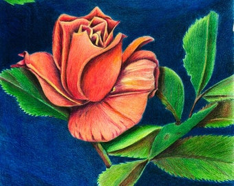 Coral Rose, Flower, Home Decor, Wall Art, Original, Colored Pencil