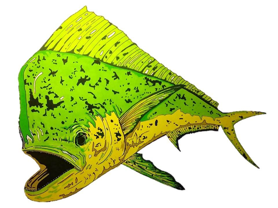 Mahi mahi fish drawing images for Mahi mahi fish pictures