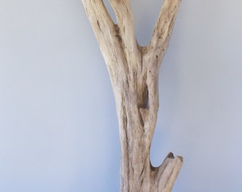 """Outstanding Freshwater Driftwood from the Tennessee River, 36"""" x 15"""" x 3"""""""