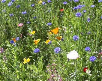 California Coastal Wildflower Mix (500 thru 128,000 seeds) bulk wholesale butterfly ST07