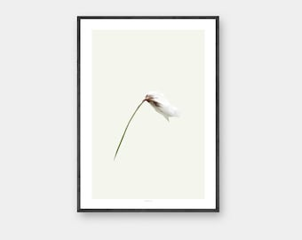 Cotton Grass poster, A3