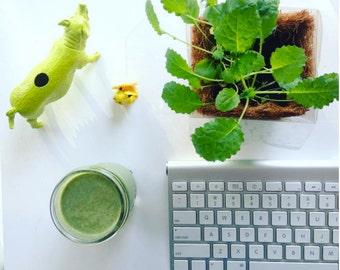 Kale Grow Kit
