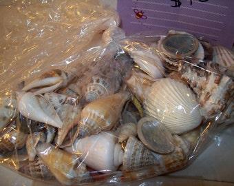 Craft Sea Shells Starfish Grab bag-Sea Shells Craft Supplies-DIY craft projects-Sea Shells-Starfish-Xmas Sale-shells-supplies