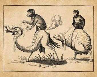 Monkeys Riding Bizarre Fantasy Bird Creatures Antique Book Illustration Engraving Art Print Pierre Firens c. 1580
