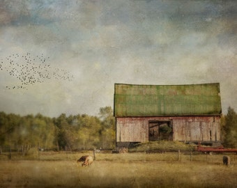 Barn Photograph, Fine Art Print, Rural Landscape Photography, green and gold, country, rural art print, farm photo, Fine Art Photography,