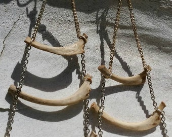 Rib earrings