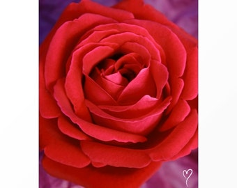"""Red Home Decor of a Beautiful Red Rose, Wall Decor, Modern Decor, Rose Wall Art, Rose Art, Red Flower Print """"Red Rose Blossom"""""""