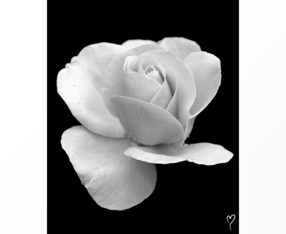 Items similar to black and white wall decor white rose for Black and white rose wall mural