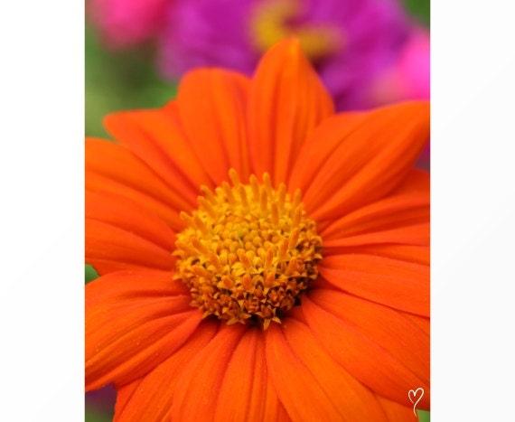 "Orange Wall Art, Orange Home Decor, Flower Wall Art, Flower Decor, Flower Photography, Orange Flower, ""Endless Afternoon"""