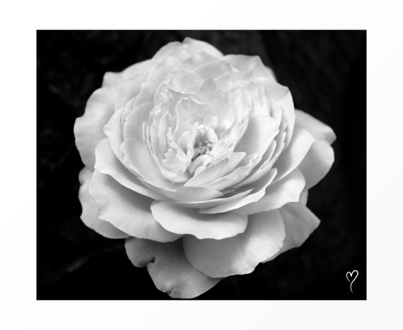 """Black and White Wall Art, Black and White Home Decor, Flower Wall Art, Flower Decor, Photography, """"100 White Petals"""""""
