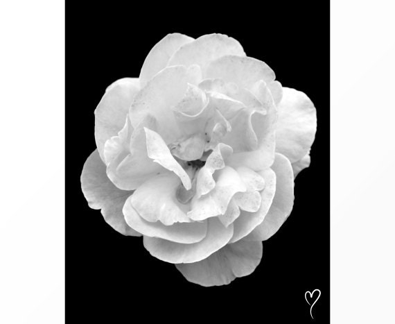 "Black and White Rose, Black and White Prints, Flower Art ""Love Her Freckles"" Fine Art Print, Modern Home Decor, Black and White Photograph"