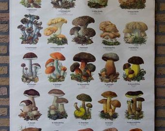 Pull Down Chart  Mushroom I  School Chart