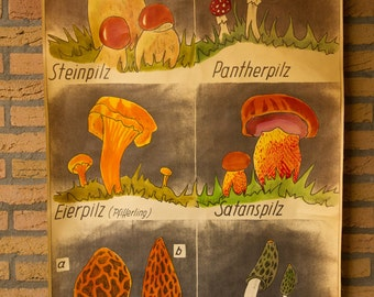 Pull Down Chart  Mushrooms  Edible and Poisonous   School Chart