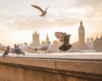 LONDON PHOTOGRAPHY, Big Ben, Elizabeth's Tower, Westminster Bridge, London Photos, British Art, British Decor, London Prints, Pigeons