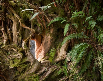 Weathered roots and ferns. Nature art photo print.