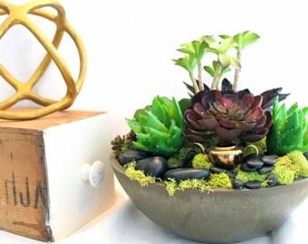 Cactus Garden Planter for the City Home or Office