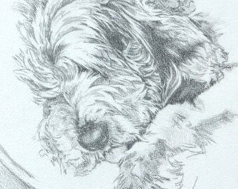 Dog Portraits & Animal Art. Commissions of your Favourite Photos.
