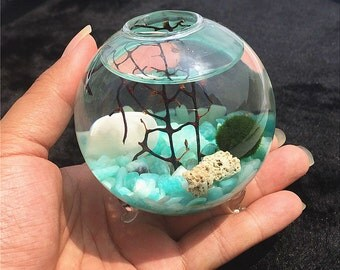 Marimo Terrarium kit with 3 Inches footed glass vase,aquatic living moss ball/amazonite gravel/sea fan- gift for friends