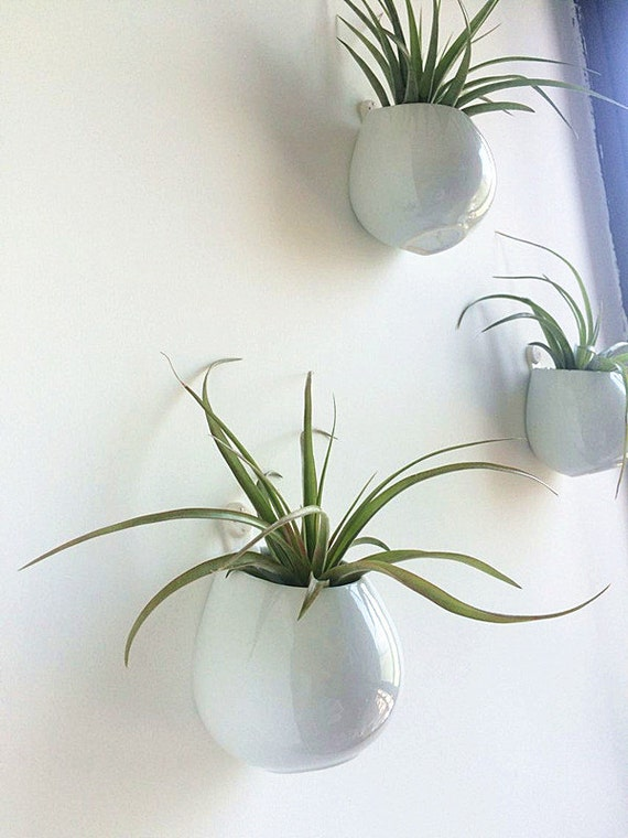 Wall hanging air plant kits 3 bright white by newdreamworld for Air plant wall hanger