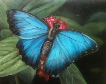 Butterfly,Oilcolor,Blue Butterfly, Blue Morpho Butterfly,