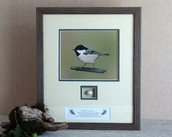 Bird Painting,Watercolour,Original Painting of a Coal Tit and Replica Egg,wildlife Painting,Realistic Painting,Original Art.