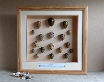 Collectable Wildlife,Framed Collectable Set of British Waders Replica Eggs,Handmade,Free Shipping