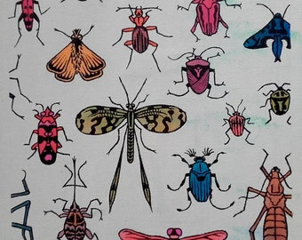 Insect menagerie.