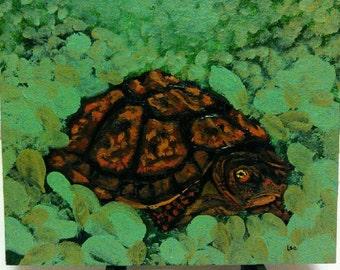 Turtle in Garden