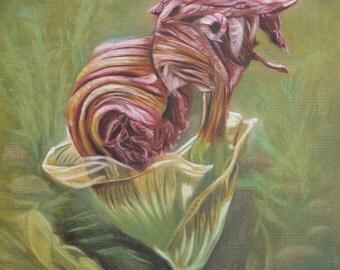 Mid-Life Flower: Irises