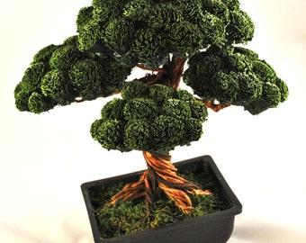 Paper Cypress Bonsai Tree