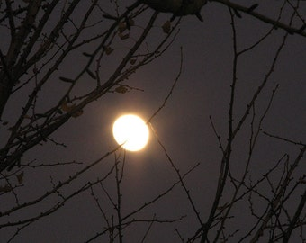 Moon and Branches: night time autumnal halloween eerie nature photograph