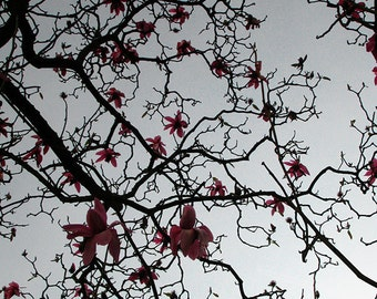 Magnolias high contrast abstract fractal nature photograph