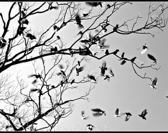 Tree Full of Birds - Digital