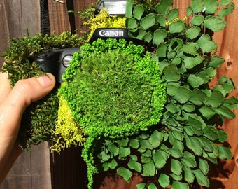 Vintage Real Moss & Fern Camera Wall Hanging