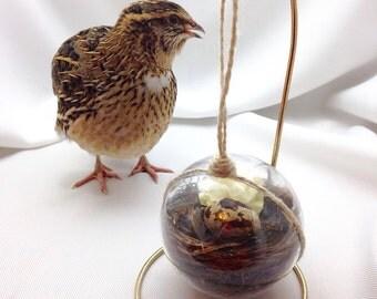 Quail Egg Nest Ornament