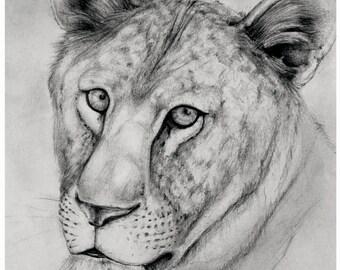 Lion1 (Print)