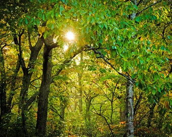 Large Print Fall sunshine, landscape, photography, trees with light