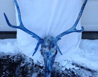 Painted Elk Skull