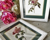CLEARANCE SALE!! 2 Rose Botanical Framed Prints Shabby White Distressed Ribbed Frames 10X12 Duchesse Pink Rosebud Green Mats Picture Hangers