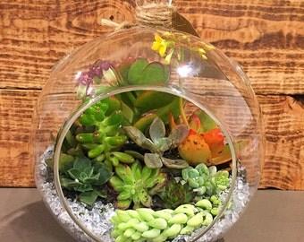 Succulent Terrarium, Round Glass Globe