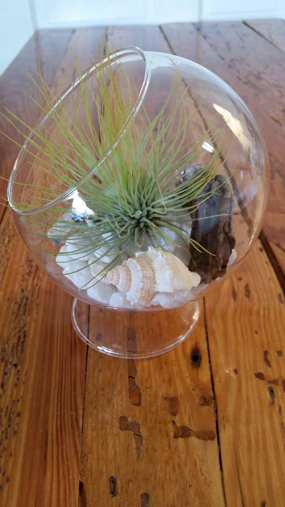 Glass Globe Air Plant Andreanna Standing Glass