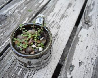 Succulent Plant in Handmade Mug