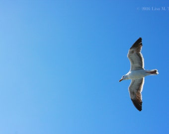 "Blue Sky Bird Soaring - Art Photography Print - ""Soaring Solo"""