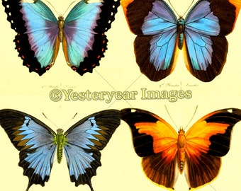 Vintage 19th-Century BUTTERFLIES ILLUSTRATIONS - Printable Digital Images - Collage Sheets - Instant Download - 3 PNG Files 4x4. 2x2. 1x1