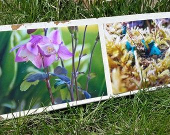 Nature macro series photography