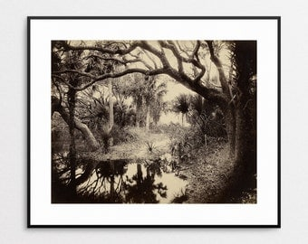 Live Oaks and Palmetto, Everglades, Florida, 1886 - Vintage Photo by George Barker - Fine Art Reproduction - Wall Art - Florida Landscape