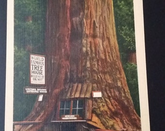 Vintage Worl Famous Tree House Postcard