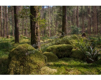 Moments In Time Irish Forest Digital Background (Landscape)