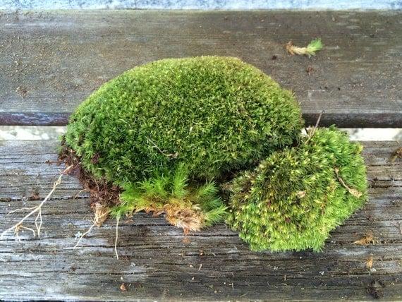 Moss cushion pillow moss craft supplies terrariums for Natural moss bath mat