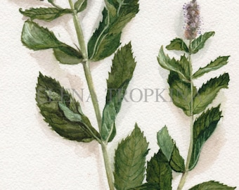 Mint. Watercolor. Giclee